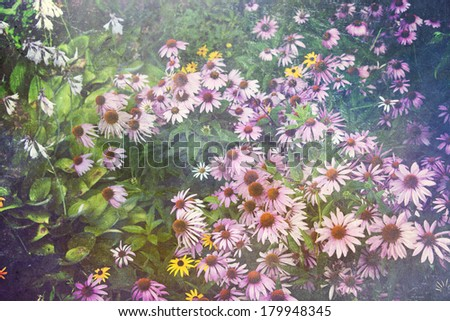 Purple coneflower garden with an artistic texture overlay fora vintage effect.  - stock photo