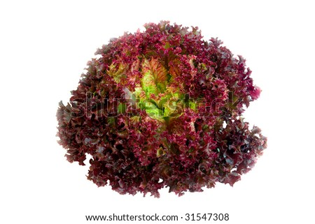 purple crisp lettuce - stock photo