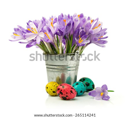 Purple crocuses and painted quail eggs isolated on white - stock photo