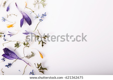 Purple dry flowers, herbs, branches, leaves and petals pattern isolated on white background. Flat lay, overhead view