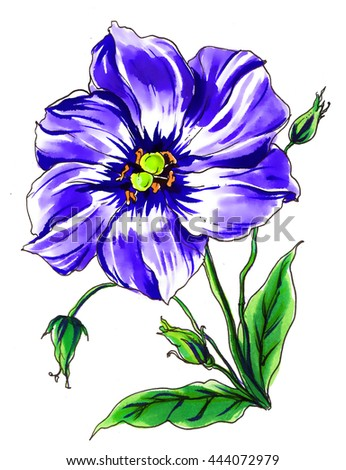 Purple eustoma flower blossom. Hand drawn vibrant watercolor tropical plant isolated on white background for wedding bouquet. Botanical illustration for printing, card, invitation. Japanese style. - stock photo