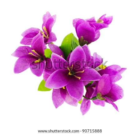 Purple fake flowers is isolated on a white (top view) - stock photo