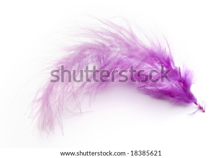 purple feather on white background