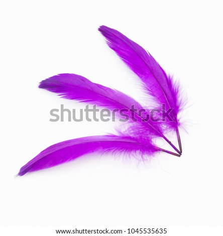 Purple feathers on a white background