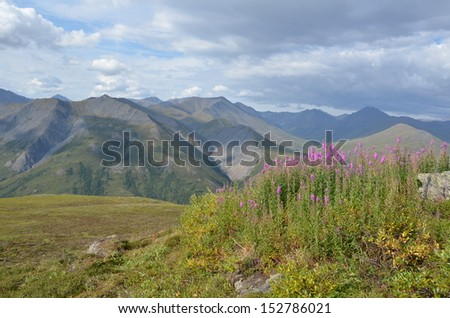 Purple Fireweed with Mountain Landscape