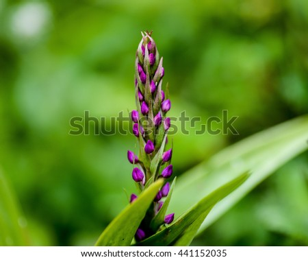 Purple Floral stalk with green background