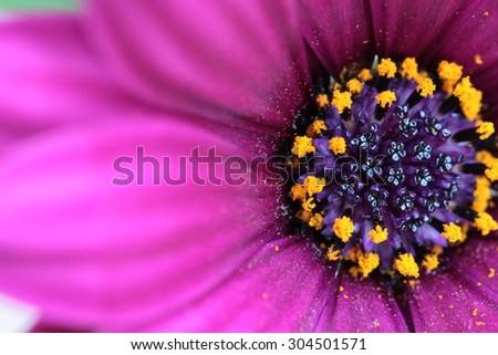 purple flower - stock photo