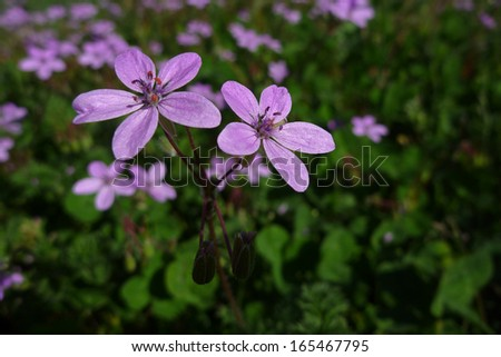 purple flower, beautiful nature photo - stock photo