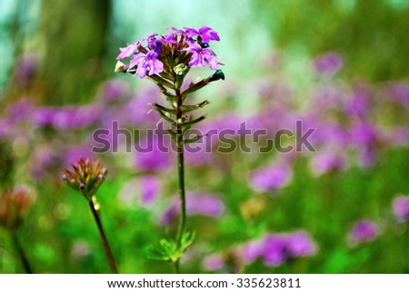 Purple flower field background under cloudy sky - stock photo