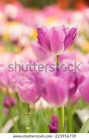 Purple flower in a garden - stock photo