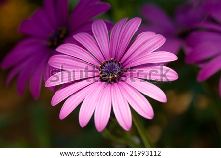 Purple flower lit by a ray of light - stock photo