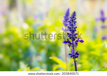 Purple flower on garden - stock photo