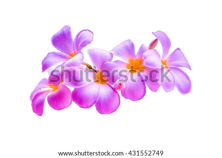 purple flower on white background ,flower isolate