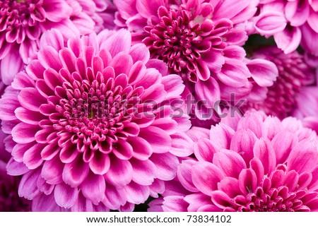 purple flowers - stock photo