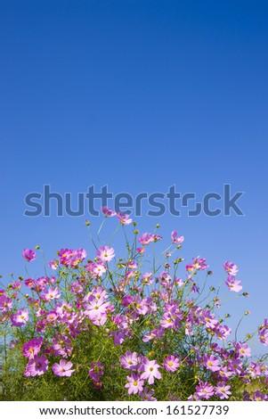 Purple flowers against a deep blue sky. - stock photo