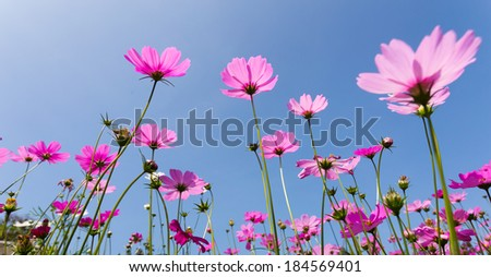 purple flowers against with blue sky and sunlight - stock photo