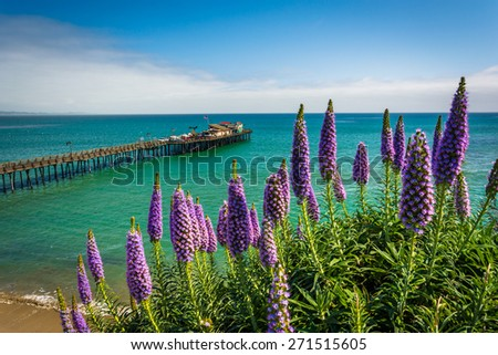 Purple flowers and view of the pier in Capitola, California. - stock photo