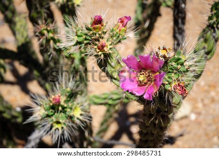 Purple Flowers at Big Bend National Park - stock photo