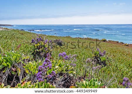Purple flowers, green plants, beautiful shimmering blue sky & aquamarine waters, gentle surf, along smooth rolling cliffs, the Big Sur Highway, on the California Central Coast, near Cambria CA. - stock photo