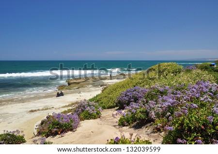 Purple flowers grow near the shore at a beach in La Jolla, California. - stock photo