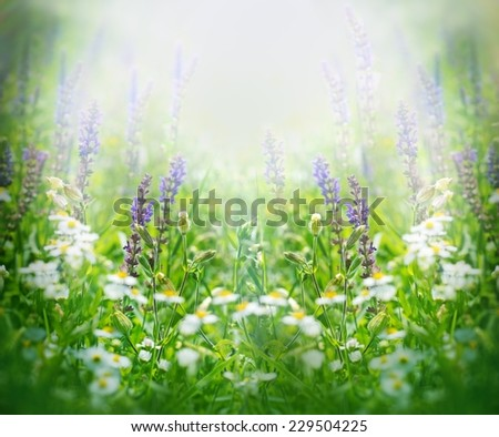 Purple flowers in spring lit by the sun  - stock photo