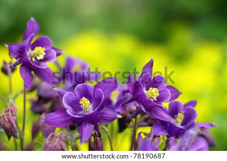 purple flowers in wild nature - stock photo