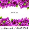 Purple  flowers is background - stock vector