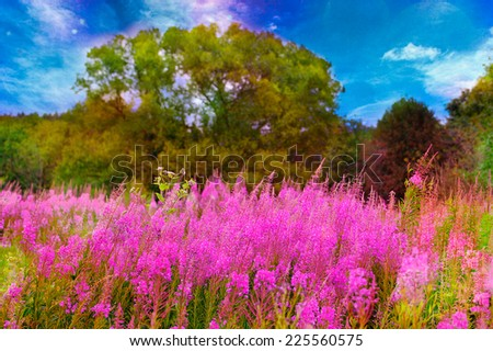 Purple flowers on a meadow in rural areas. Landscape with beautiful blue sky . - stock photo