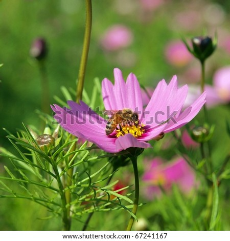 purple flowers with bee - stock photo