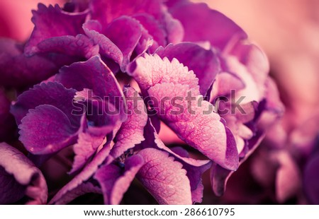 purple garden flowers background - stock photo