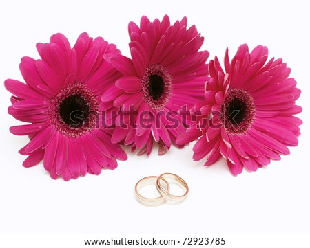 purple gerbera and two wedding rings - stock photo