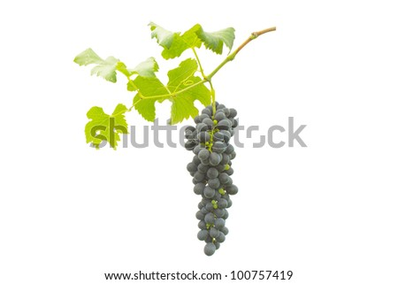 purple grape  with leaves isolated on white background - stock photo