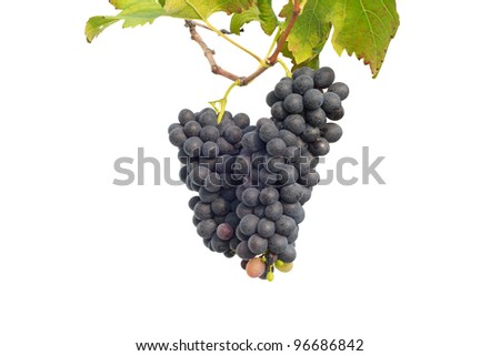 purple grape  with leaves isolated on white background
