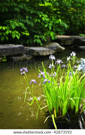 Purple iris flowers in landscaped natural garden pond - stock photo