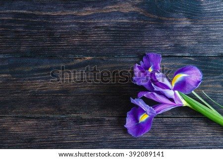 Purple iris on a wooden background with space for your message - stock photo