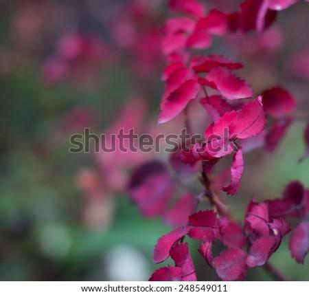 Purple leaf - stock photo