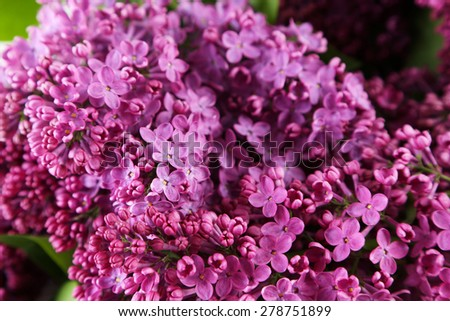 Purple lilac flowers background - stock photo