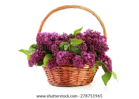 Purple lilac flowers in basket isolated on white - stock photo