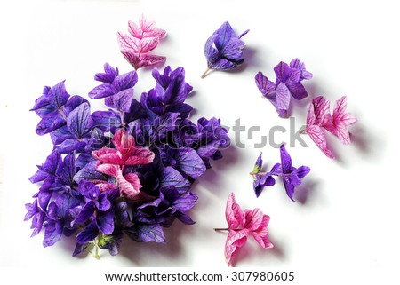 purple lilac leaves on a white background