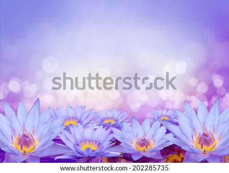 purple lotus  with bokeh - stock photo