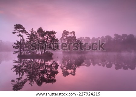 purple misty sunrise over wild lake in forest, Noord Brabant, Netherlands - stock photo