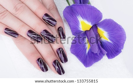 Purple nails manicure and violet flower - stock photo