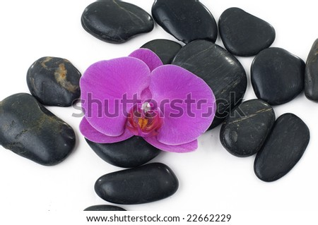 Purple orchid and black stones