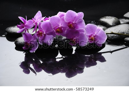 Purple orchid and black stones with reflection - stock photo