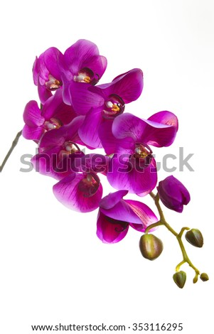 purple orchid artificial flower isolated on white background - stock photo