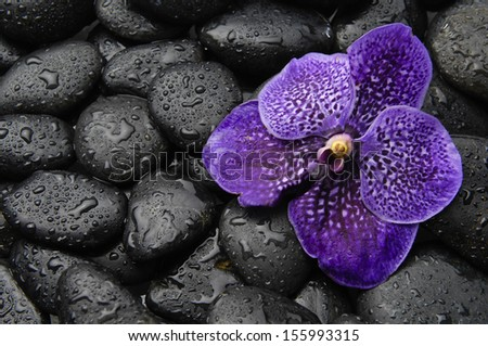 Purple orchid flower and stones in water drops - stock photo