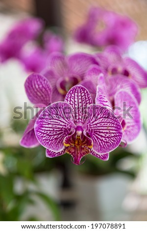 Purple orchid flowers in garden - stock photo