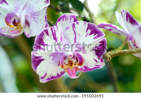 Purple orchid flowers, selective focus and shallow DOF - stock photo