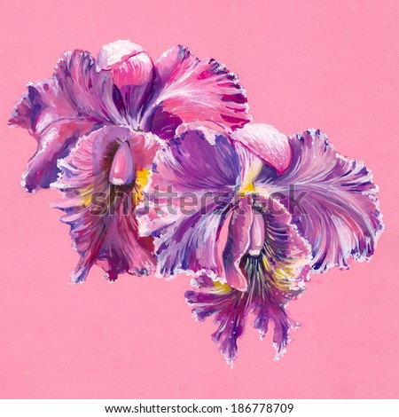 Purple orchid isolated on pink background.Picture created with watercolors. - stock photo