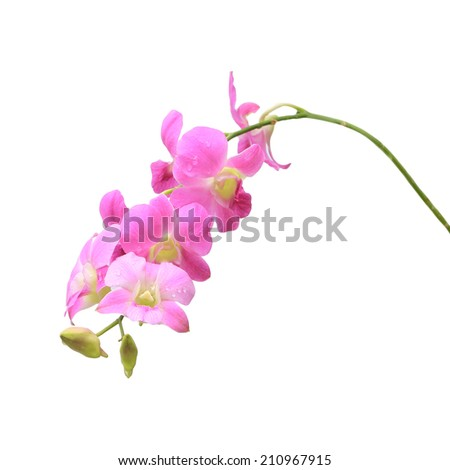 Purple orchid. Isolated with a white background - stock photo